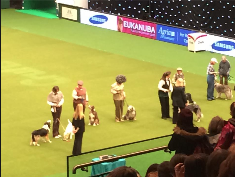 Crufts 2015 Freestyle line up