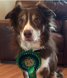 Tyler With Crufts Rosette